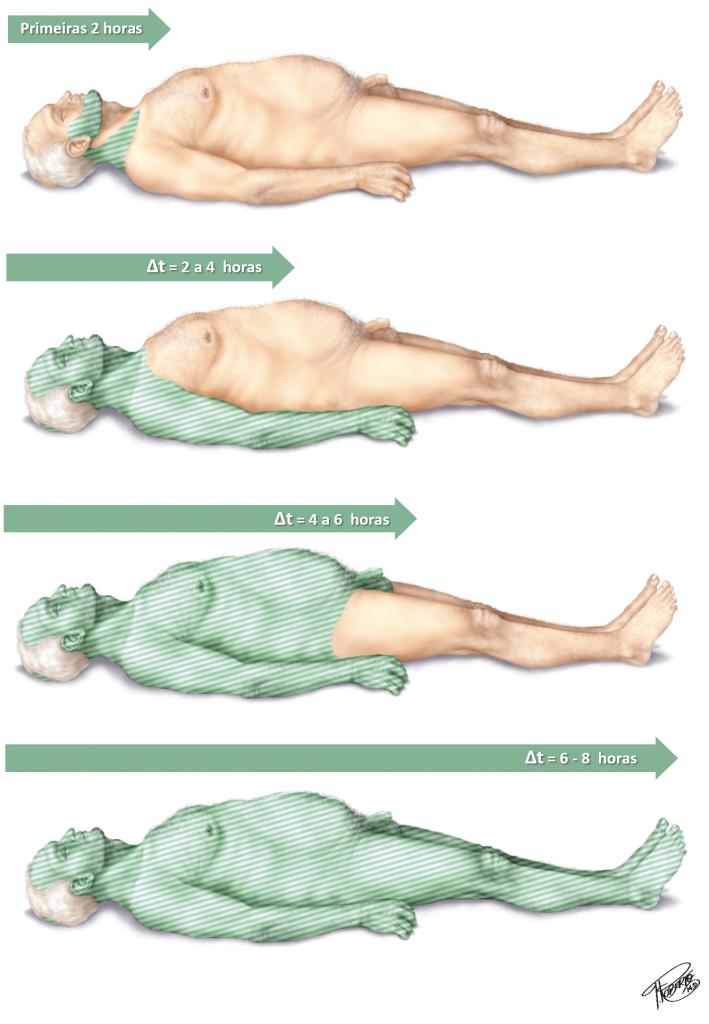 evolução da rigidez cadavérica